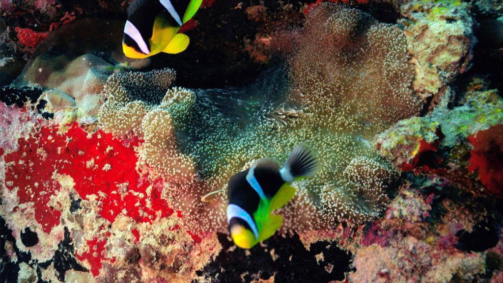 Cheval Blanc Randheli diving